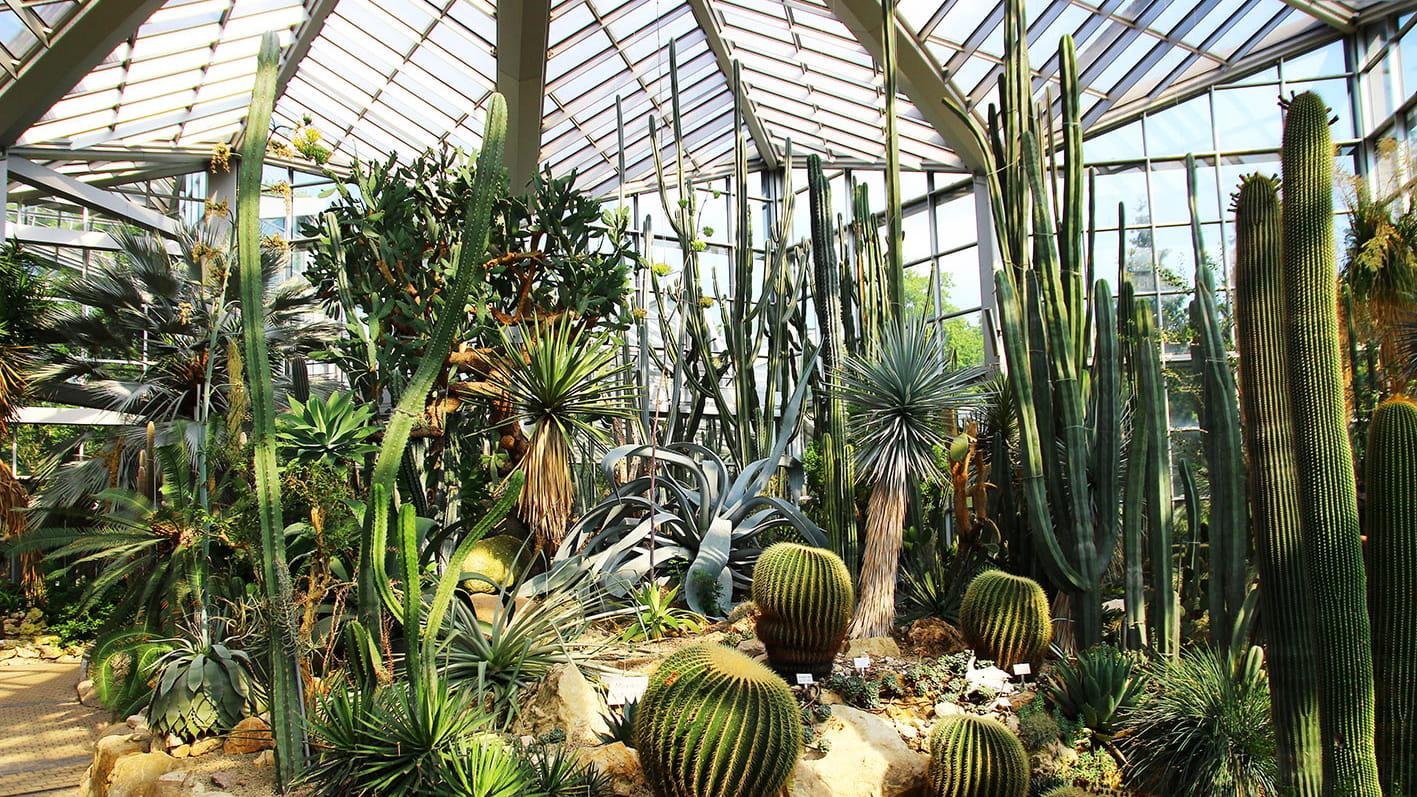 Palmengarten De